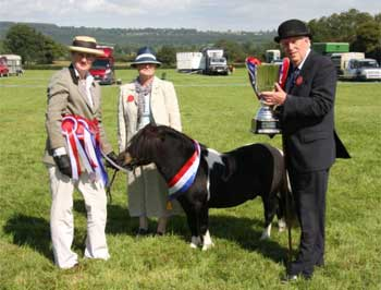 2011 Show Results Wessex Shetland Pony Group